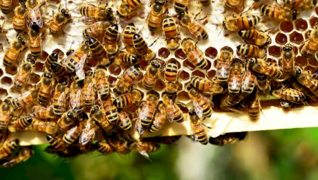 Ce fac insectele iarna? Unde dispar acestea?