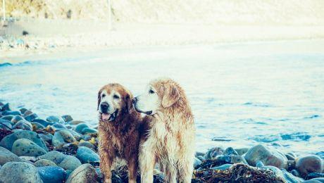 Câți ani are câinele tău? Un an câinesc înseamnă cu adevărat șapte ani ai omului?