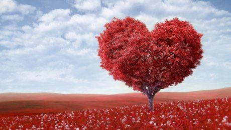 Povestea simbolului inimii. De ce desenăm inima astfel? ♥