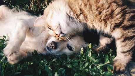 Care animale sunt mai deștepte, câinii sau pisicile?