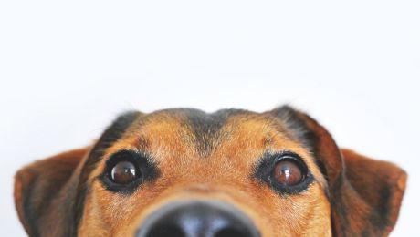 De ce dau câinii din coadă? Ce încearcă să transmită când fac acest gest?