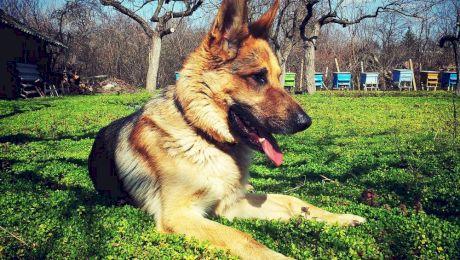 Cum se dresează un câine să găsească droguri?