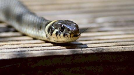 Care sunt țările în care nu există șerpi?