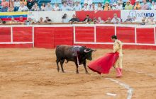 De ce capa toreadorului este roșie, dacă taurii nu disting culorile?