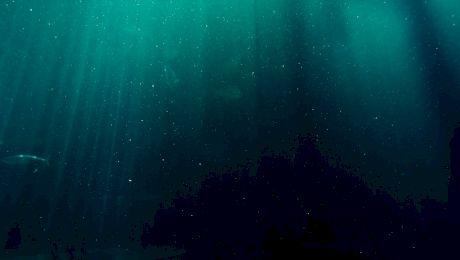 Ce se găsește pe fundul Oceanului?