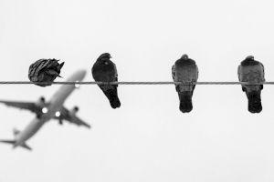De ce păsările nu se electrocutează pe liniile de înaltă tensiune?