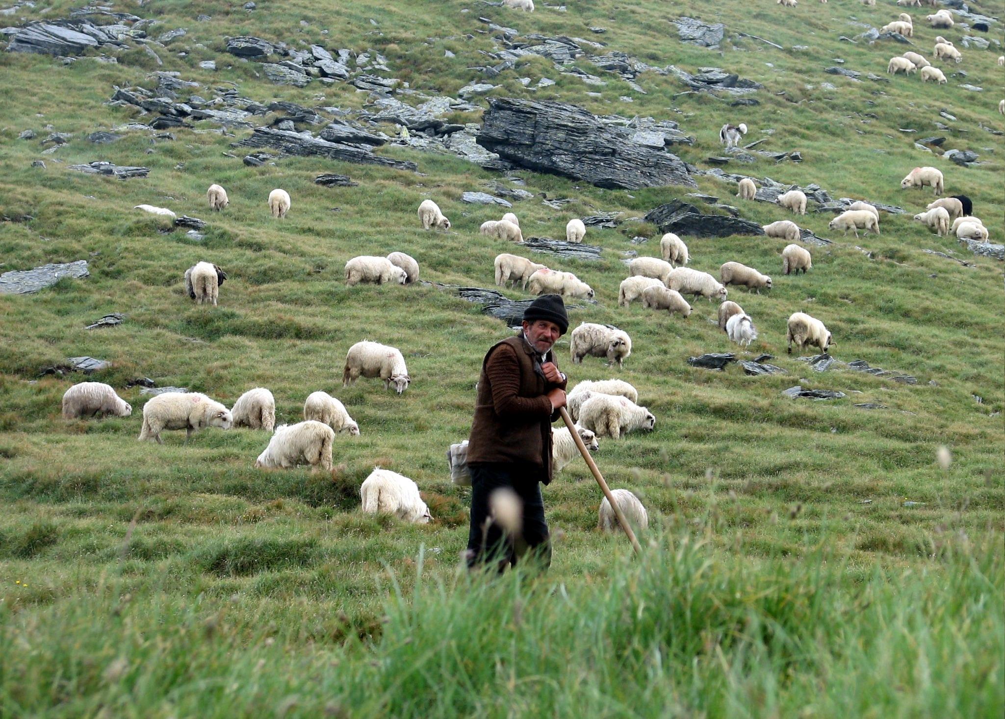 Sa revenim la oile noastre