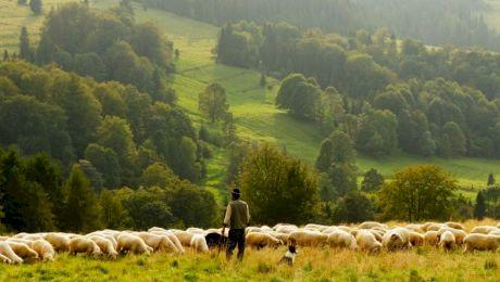 Care sunt pleonasmele din limba română întâlnite cel mai des?
