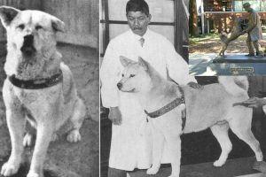 Cine a fost cel mai credincios câine din istorie?