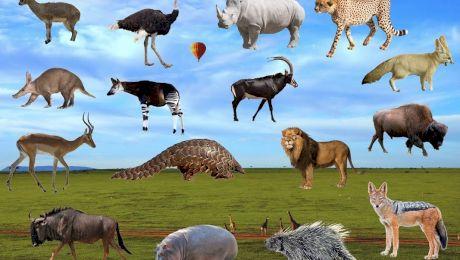 Care este singurul mamifer care nu poate sări?