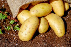 Când a venit cartoful în România și cum se numea inițial?