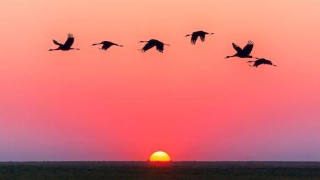 E adevărat că păsările dorm în timpul zborului?