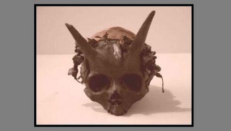 E adevărat că au fost descoperite mai multe cranii umane cu coarne?