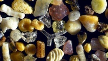 Care sunt cele mai uimitoare lucruri văzute la microscop?
