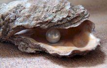 E adevărat că un pescar a găsit o perlă de 34 kilograme? Ce s-a întâmplat cu obiectul timp de 10 ani!