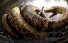 E adevărat că a existat pe Pământ un șarpe lung de 14 metri și greu de o tonă și jumătate?