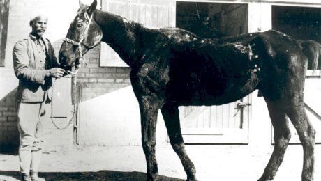 Ce puteai să cumperi în Țările Române în anul 1612 cu un cal? Care e singura rasă de cai 100% românească?