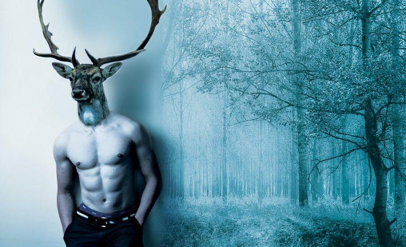 """Care este originea cuvântului """"încornorat""""? Care este legătura dintre un soț înșelat și coarnele cerbului?"""