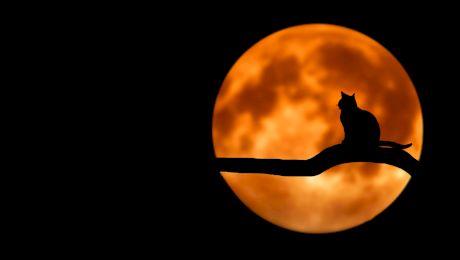 E adevărat că ardelenii au mâncat ciori și pisici pentru a supraviețui? Ce gust are carnea de pisică?