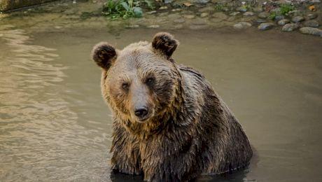 E adevărat că în anii '30, urşi din toată ţara se adunau pe străzile din Bucureşti?