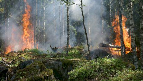 Care au fost cele mai devastatoare incendii de vegetație din ultimii ani?