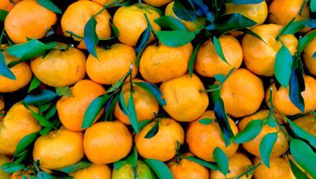 Care este diferența dintre mandarine si clementine?