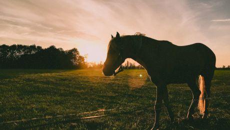 De ce dorm caii în picioare?