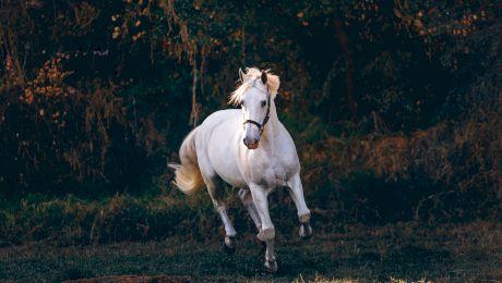 """Cine a spus """"dau un regat pentru un cal"""" și în ce context?"""
