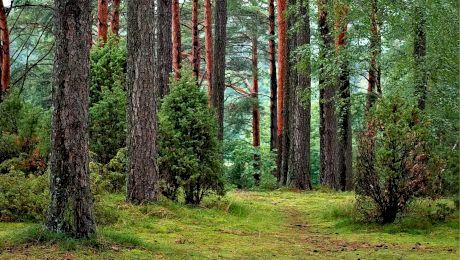 Care sunt țările care nu au deloc pădure? Cât la sută din România mai este pădure?