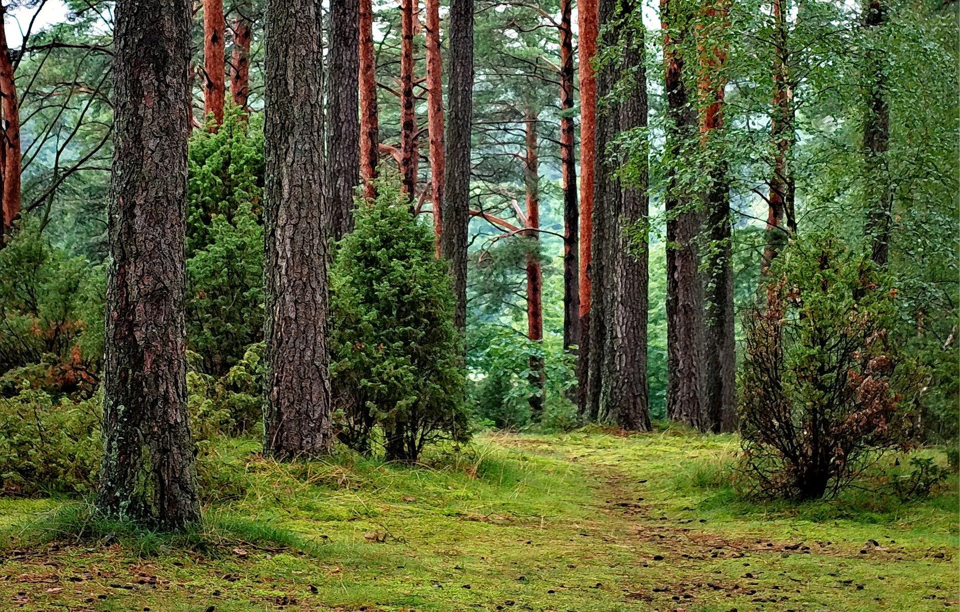 pădurea nu poate slăbi