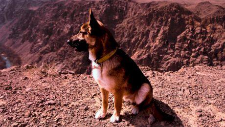 Care este cea mai agresivă rasă de câini, dar cea mai periculoasă?
