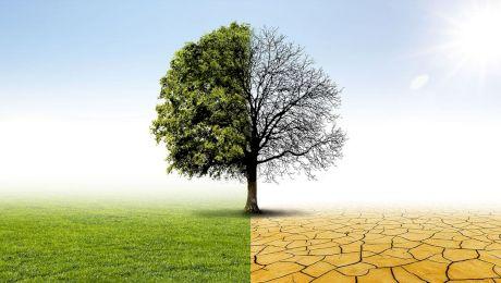 Care este singurul continent fără păduri și fără animale terestre?