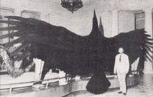 Care e cea mai mare pasăre care a trăit vreodată?