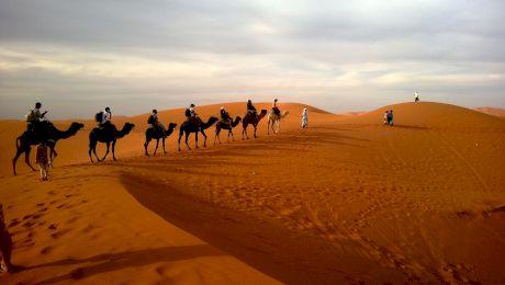 E adevărat că Arabia Saudită importă nisip și cămile din Australia?