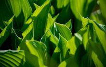 Ce este fotosinteza? Cum funcționează aceasta?