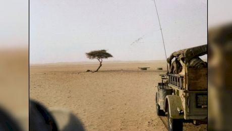 Unde a crescut cel mai izolat copac din lume? Era singur pe o distanță de 400 de km
