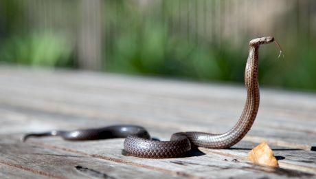 """Ce înseamnă cand visezi șarpe? """"Am visat șarpe"""""""