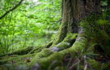 De ce crește mușchiul copacilor pe partea nordică? Care este explicația?