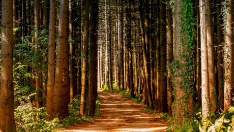 Cât de multă pădure deține IKEA în România? Cât (mai) deține statul?