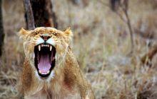 Care este cea mai mortală creatură de pe Pământ? Ucide 725.000 de oameni anual