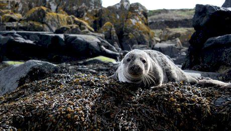 E adevărat că au existat foci în Marea Neagră? Ce s-a întâmplat cu ele?