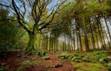 Care este cea mai bătrână pădure din România? Sunt aici arbori de pe vremea lui Ștefan cel Mare!