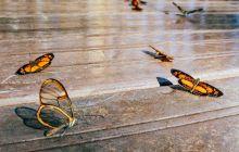 Cât trăiesc fluturii? Ce mănâncă fluturii?
