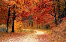 Care sunt lunile anului și cum sunt împărțite pe anotimpuri?