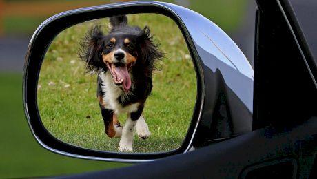 De ce latră câinii la roțile mașinilor? Care este motivul?