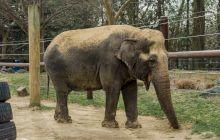E adevărat că prima bombă aruncată asupra Berlinului în Al Doilea Război Mondial a omorât un elefant de la Zoo?