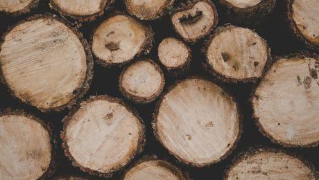 """Ce înseamnă dacă ți se spune că ești """"lemn Tănase""""? De unde vine expresia?"""