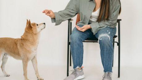 Cum poți să dresezi un câine? Cinci comenzi de bază