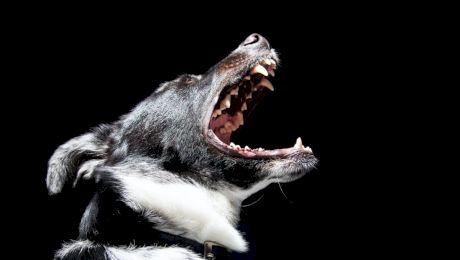 De ce latră câinii noaptea? Ce să faci să nu mai latre?