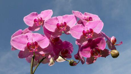 Cum îngrijești o orhidee? Iată câteva sfaturi utile de urmat!
